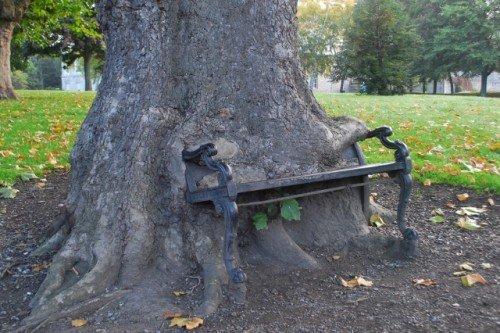Bark Bench 2
