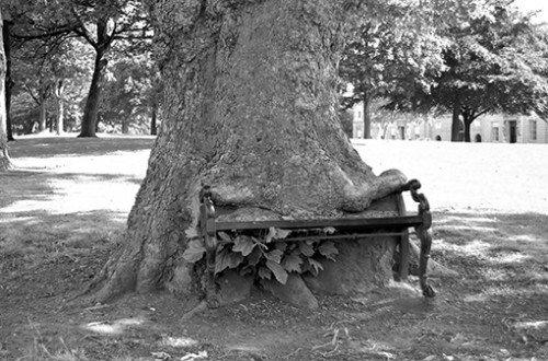 Bark Bench