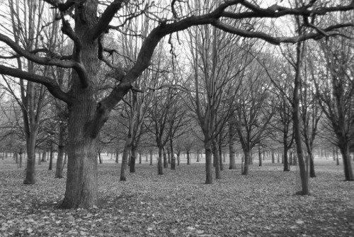 Forest Stroll Dublin